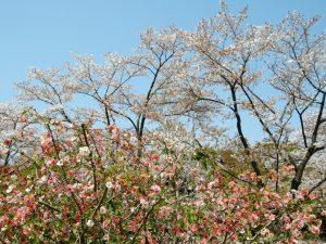 小林麻央の現在 ブログ KOKOROでマジヤバ画像流出!家族崩壊?
